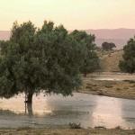 Spring in the Negev